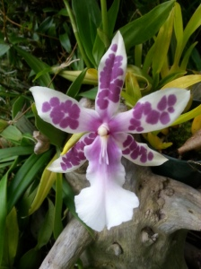 The Muttart has a large orchid collection, many of which can be found in the tropical pyramid.