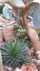 Leaping lizards! This colourful characters can be found hiding amongst the cacti in the arid pyramid.